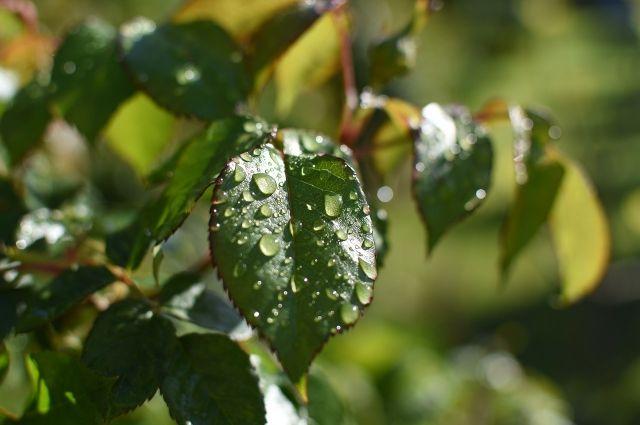 В некоторых районах области пройдет ливень и град.