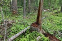 Рубил лес без документов.
