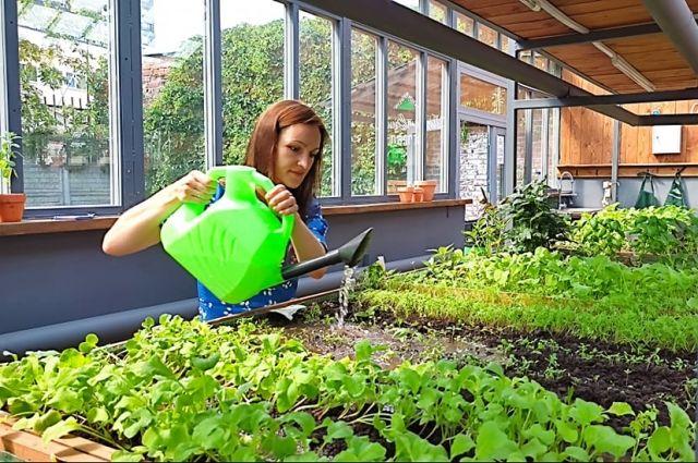 Евгения Кашилова выращивает будущие ингредиенты для блюд кстолу.
