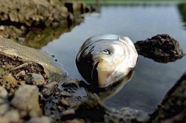 В киевских прудах массово гибнет рыба: экологи обнаружили яд в воде