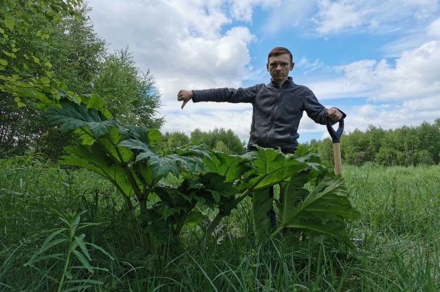 Борщевик заполонил поля и теперь хочет поработить город, не бывать этому
