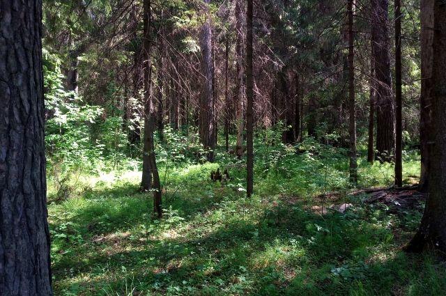 В Тюмени решили продлить запрет на лесные прогулки до 12 августа