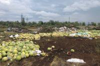В лесопосадке за улицей Автодромной в Оренбурге устроили свалку пропавших арбузов.
