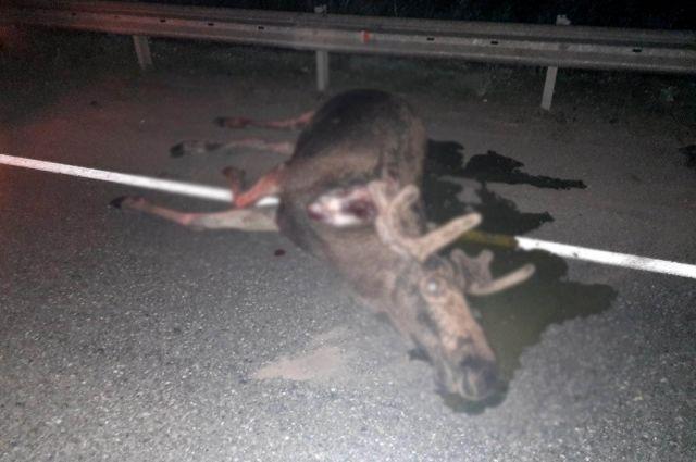В результате ДТП погибла 30-летняя пассажирка автомобиля, водитель получил травмы, его отвезли в больницу.