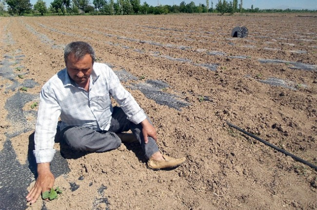 Свердловские аграрии потеряли в этом году до 50% урожая.