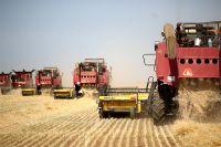 Уборка урожая пшеницы.