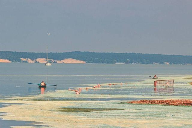 Сине-зелёные водоросли опасны для речной флоры и фауны, поскольку выделяют цианотоксины.