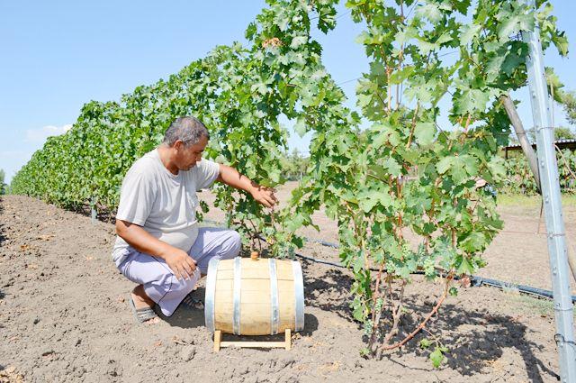 Тур на виноградные плантации – один из самых востребованных.