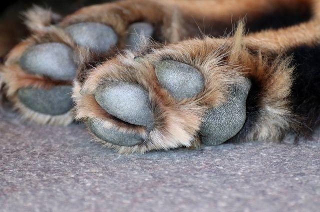 В Оренбурге от жестокости людей снова пострадала собака.