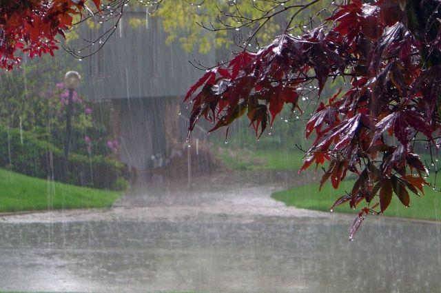 Жара и грозовые ливни: синоптики сообщили, какой будет погода на выходных