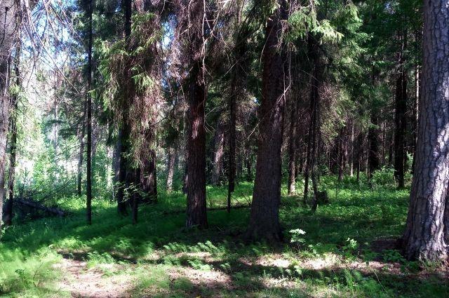 Особый противопожарный режим продолжает действовать. Жечь костры в лесах запрещено.