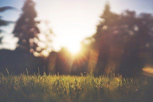 В Оренбуржье 1 августа ожидается жара до 36 градусов.