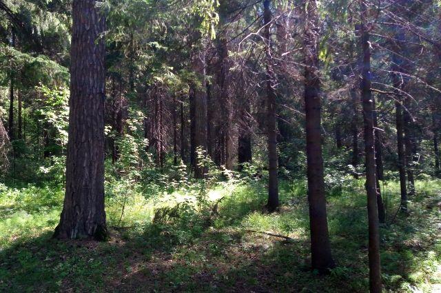МЧС напоминает о запрете посещать леса.