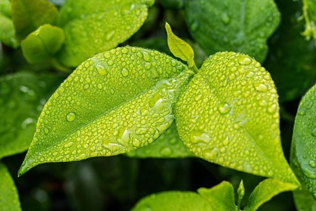 Питомник с редкими видами растений хотят открыть в Казани