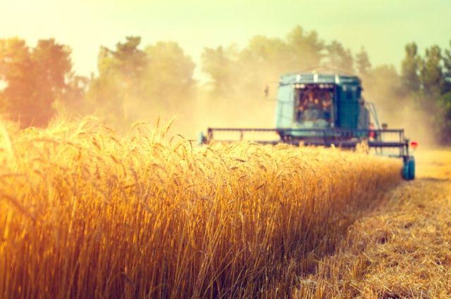Россельхозбанк на 69% увеличил объем льготного кредитования АПК за 1 полугодие 2021 года.