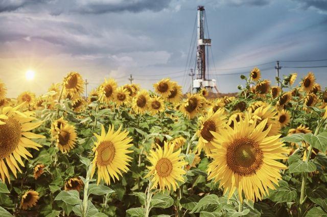 «Газпром нефть» совершенствует систему экологического мониторинга в Оренбуржье.