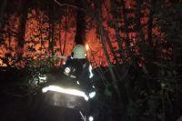 В Оренбурге по факту пожара в Протопоповской роще возбудили уголовное дело.