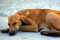 Жалоб на бродячих собак в краевой столице стало меньше.