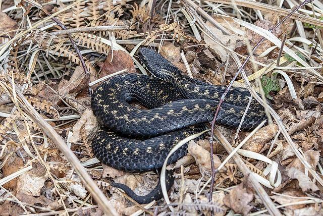 Жители предполагают, что змеи обитают в логу.