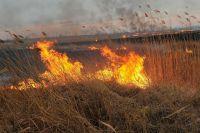 Ландшафтный пожар в районе поселка 9 Января полностью ликвидирован.