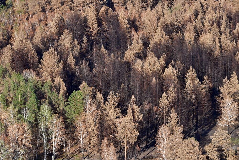 Лес серьёзно пострадал от огня.