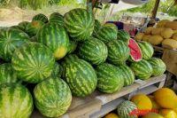 Оренбуржцам не стоит ожидать снижения цен на арбузы и дыни.