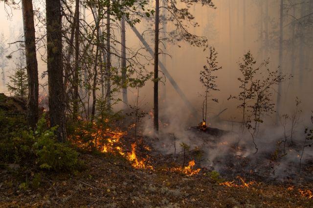 В Башкирии продолжают действовать 22 очага лесных пожаров