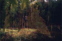 «Зеленые легкие» Оренбуржья горят из-за отсуствия лесников, которым не хотят платить за труд.