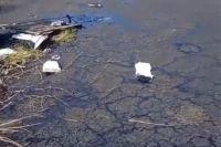 Двойной ущерб живой природе: в Соль-Илецке собаки утонули в луже нефтепродуктов.