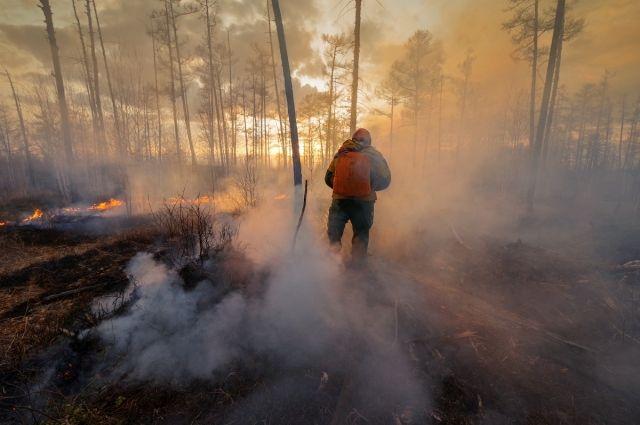 МЧС сообщило об умышленных поджогах леса в Башкирии