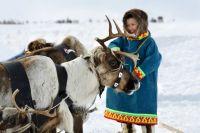 100 млн рублей выделят оленеводам.