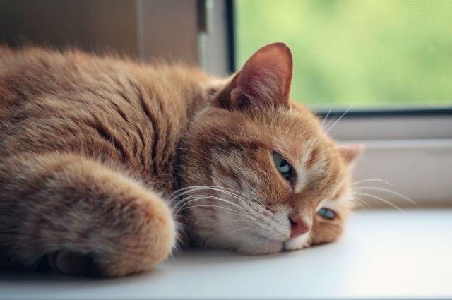 Следите, сколько воды пьет ваша кошка в жару. От этого зависит здоровье питомца.