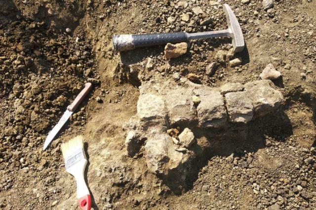 Орские школьники принимают участие в раскопках останков динозавров.