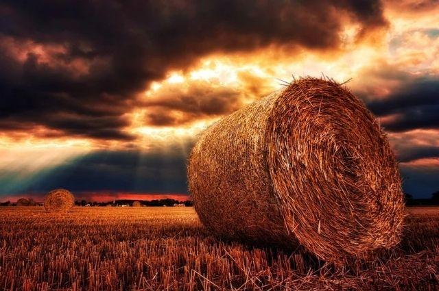 В Аскинском райне Башкирии среди привитых от ковида разыграют стог сена