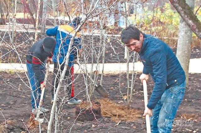 Саженцы 3500 деревьев украсят различные районы города уже этой осенью.