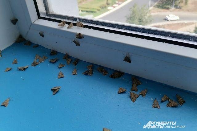 Даже в подъездах домов Оренбурга - сотни бабочек лугового мотылька.