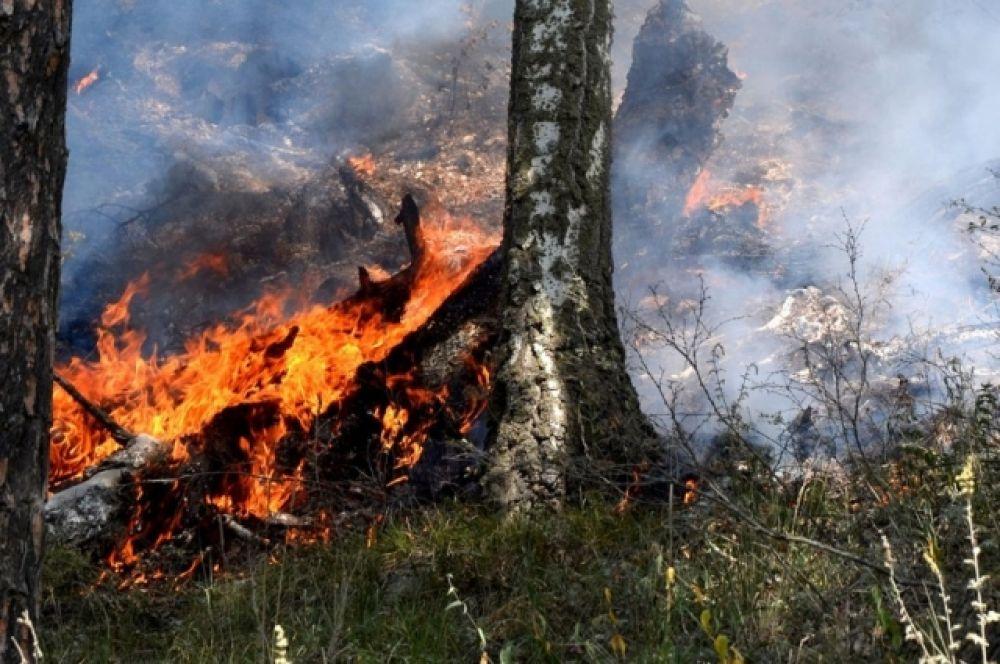 Во многих местах деревья охвачены пламенем.