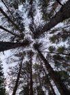 Тюменские леса - 2021.