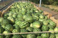Пограничники не пустили в Казахстан 10 тонн оренбургских арбузов.