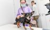 Ветеринарный пункт в Коротчаево, 2021.
