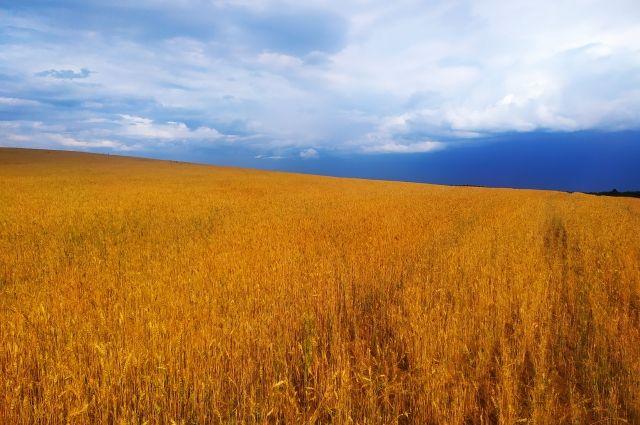 В Оренбургской области вновь прогнозируется жаркая погода.