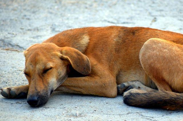 В центре Оренбурга произошло массовое отравление бродячих собак.