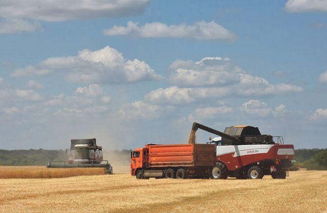 В области завершили уборку зерна-2021.