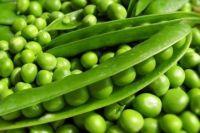 Зеленый горошек: польза и вред для организма человека.