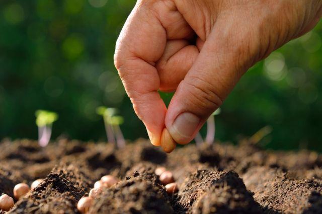 Проект «Иннагро» приглашает фермеров к участию в испытаниях биопрепаратов через Свое Фермерство.
