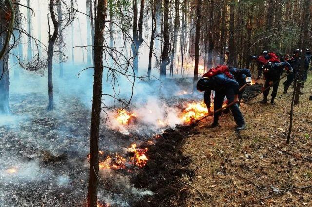 Крупный пожар в Бузулукском бору, уничтоживший 850 га леса, ликвидирован.