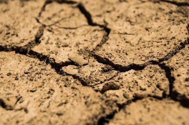 Засуха 2021 года в Оренбуржье уничтожила 13% посевов на почти 3 миллиарда рублей.