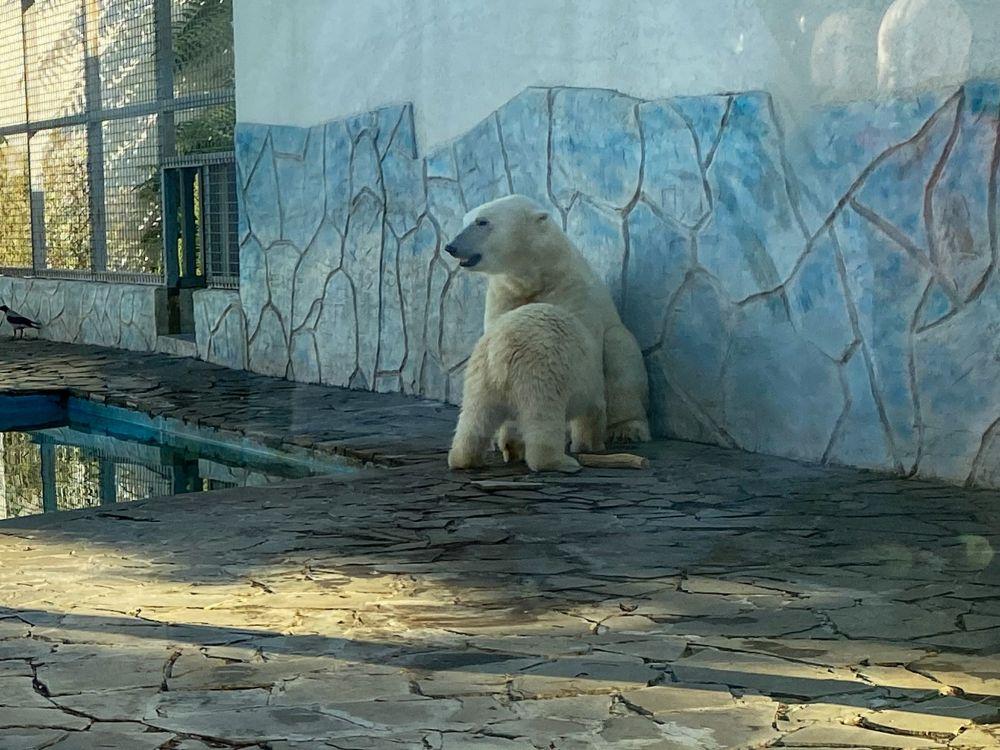 А наигравшись побежала подкрепиться к маме-медведице.