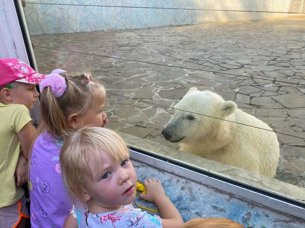 Девятимесячный медвежонок Айка играется с гостями зоопарка.