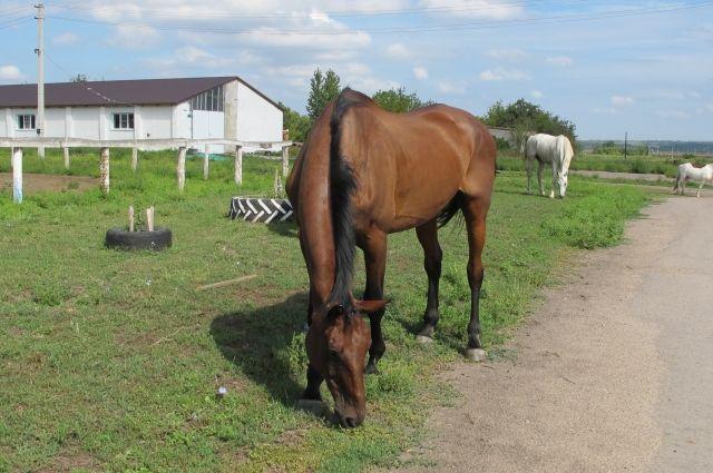 Детский конно-спортивный клуб «Олимп» основан в 2006 году.